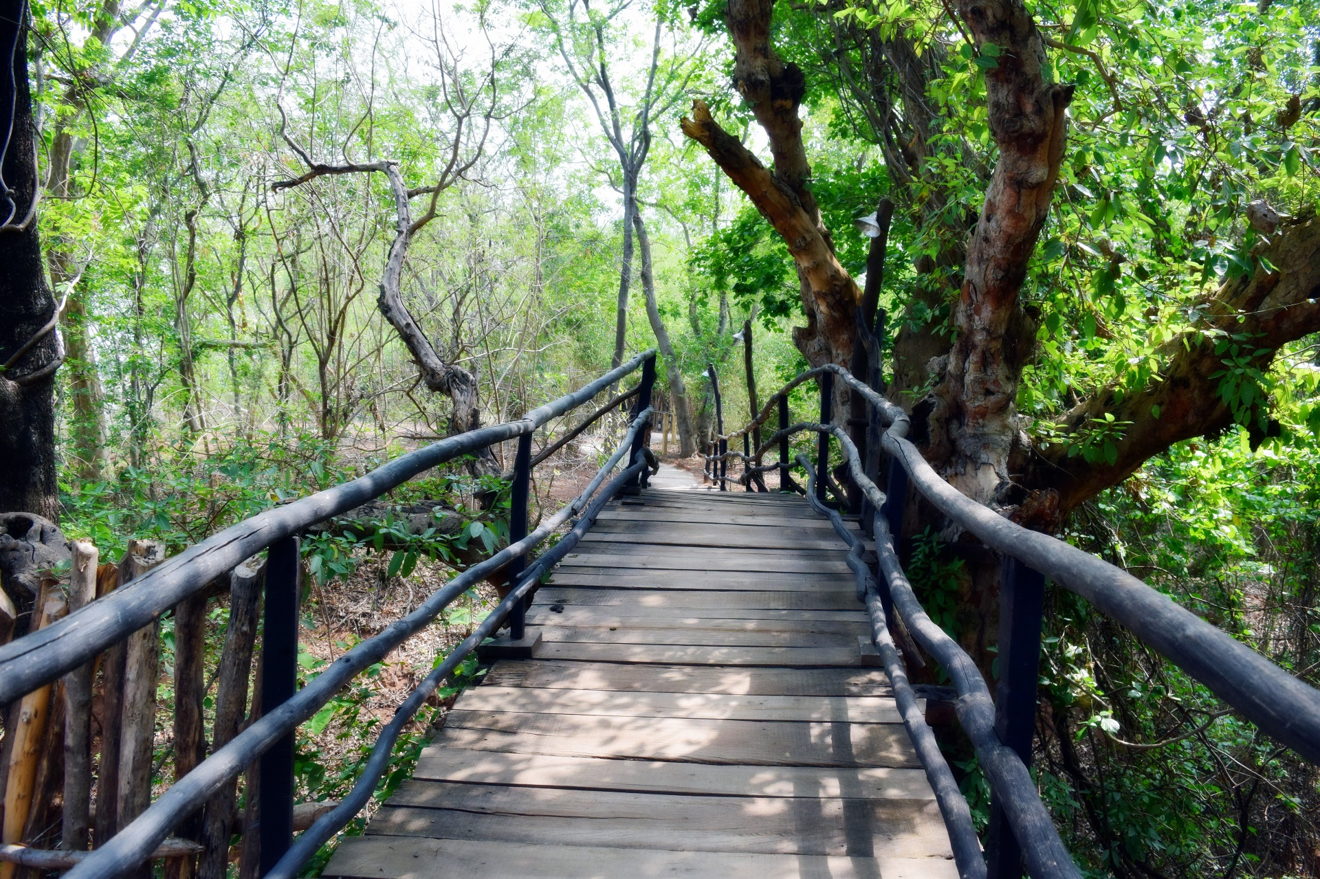 Bamboo bridge across Indian forest.