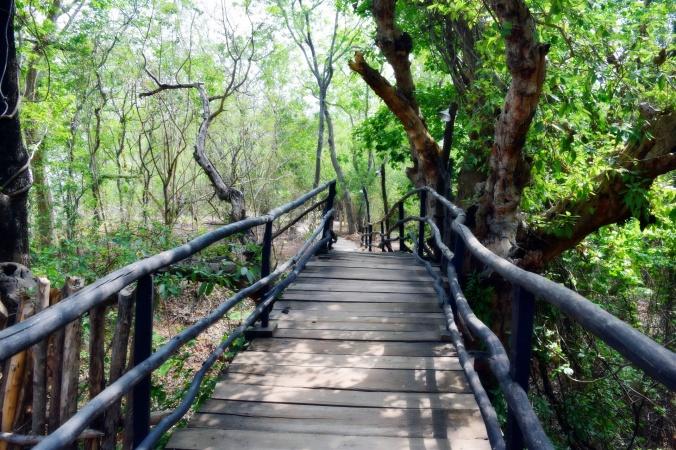 Bamboo bridge across Indian forest.